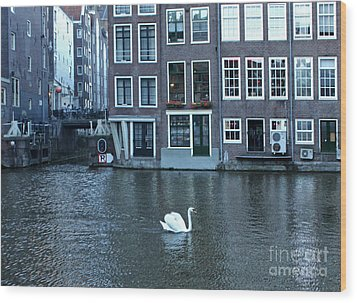 Swan In Amsterdam Wood Print by Gregory Dyer