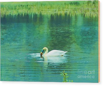 Swan Lake Wood Print by Judi Bagwell
