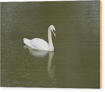 Swan Looking At Reflection Wood Print by Corinne Elizabeth Cowherd