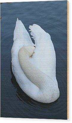 Swan Wood Print by Luis Esteves
