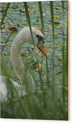 Swan Naturally Wood Print by Odd Jeppesen