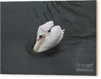 Wood Print featuring the photograph Swan On Black Water by Les Palenik