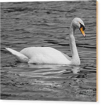 Swan On Loch Erne. Wood Print by Stephen McLean