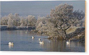 Wood Print featuring the photograph Swan Patrol by Rob Hemphill