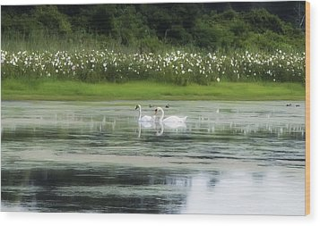 Swan Pond Wood Print by Bill Cannon