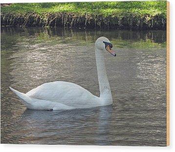 Swan Song Wood Print