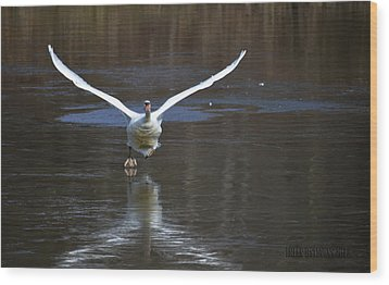 Wood Print featuring the photograph Swans On Ice by Brian Stevens