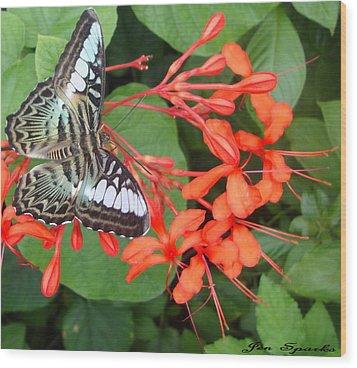 Sweet Coral Wood Print