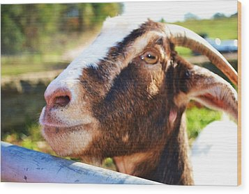 Wood Print featuring the photograph Sweet Goat by Mary Zeman