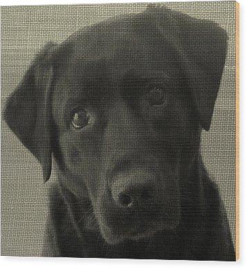 Sweet In Black B Wood Print by Kathy Sheeran