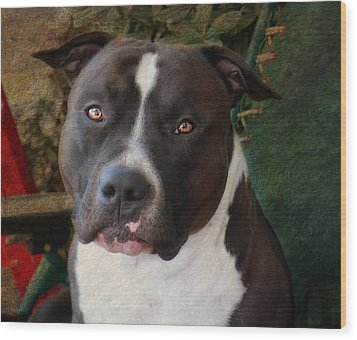 Sweet Little Pitty Wood Print by Larry Marshall