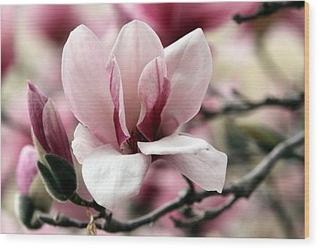 Wood Print featuring the photograph Sweet Magnolia by Elizabeth Winter