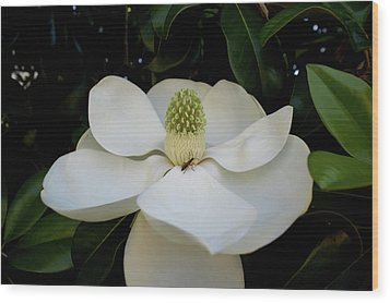Wood Print featuring the photograph Sweet Magnolia by Paul Mashburn