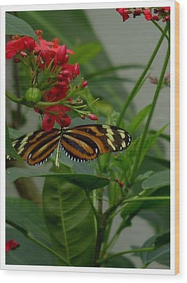 Wood Print featuring the photograph Sweet Nectar by Frank Wickham