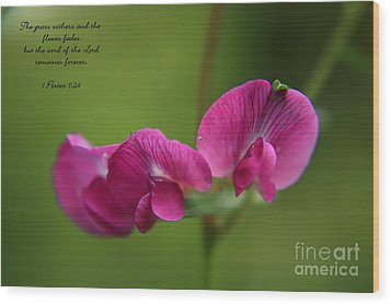 Sweet Pea Flower Wood Print by Tyra  OBryant