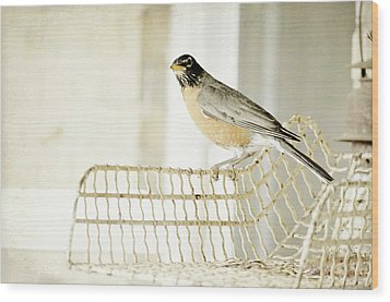 Sweet Robin Wood Print by Kim Klassen Photography