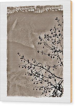Sweetgum Sepia Wood Print by Judi Bagwell