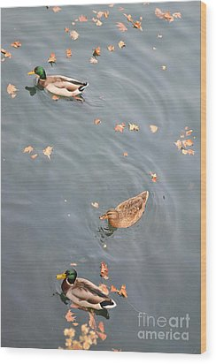 Swimming Ducks And Autumn Leaves Wood Print