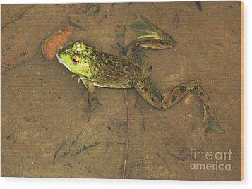 Swimming Frog Wood Print by Nick Gustafson