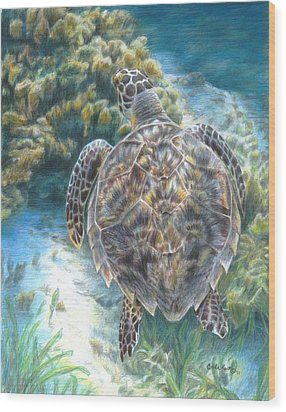 Swimming Turtle Wood Print