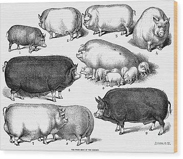 Swine, 1876 Wood Print by Granger