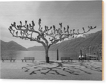 sycamore trees in Ascona - Ticino Wood Print by Joana Kruse