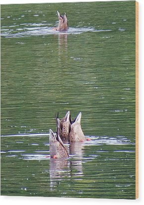 Synchronized Ducking Wood Print by Chris Anderson