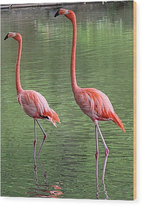 Synchronized Flamingos Wood Print by Becky Lodes
