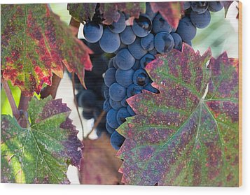Syrah Grapes With Autumn Leaves Wood Print by Dina Calvarese