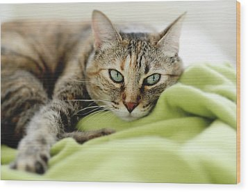 Tabby Cat On Green Blanket Wood Print by Dhmig Photography
