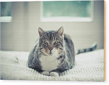 Tabby Cat Staring Straight In Camera Wood Print by Cindy Prins