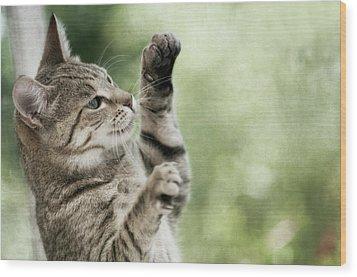Tabby Kitten Wood Print by Jill Ferry