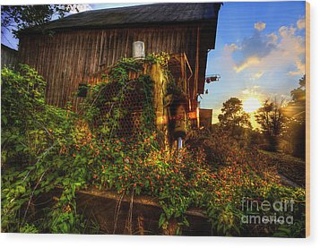 Tactor Overgrown With Flowers And Weeds At Sunset Wood Print by Dan Friend
