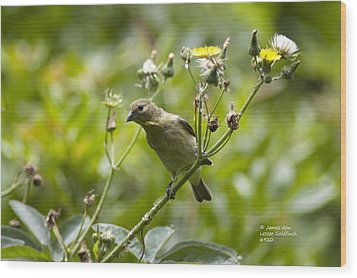 Wood Print featuring the photograph Take A Look - Lesser Goldfinch by James Ahn