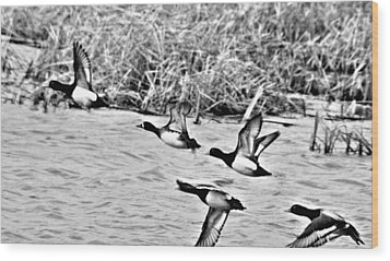 Wood Print featuring the photograph Take Flight No. 2 In Black And White by Janice Adomeit