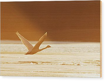 Takeoff At Sunset Wood Print by Larry Ricker
