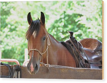 Taking A Break Wood Print by Jan Amiss Photography