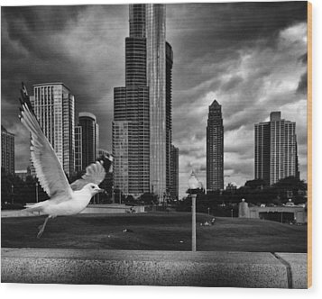 Taking Wing Wood Print by Coby Cooper