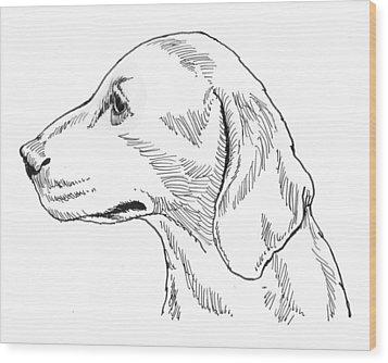 Talbot Hound Wood Print by David Burkart