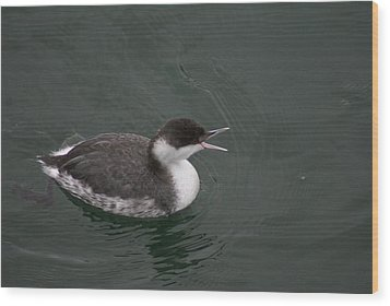 Talking Grebe Wood Print