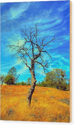 Tall Bare Tree With White Clouds And Blue Sky. Wood Print by Gregory Dean