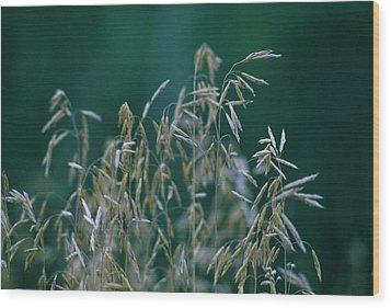 Tall Grass Seeds Wood Print by Jaye Crist