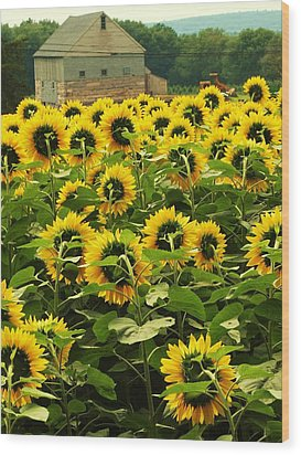 Wood Print featuring the photograph Tall Sunflowers by John Scates
