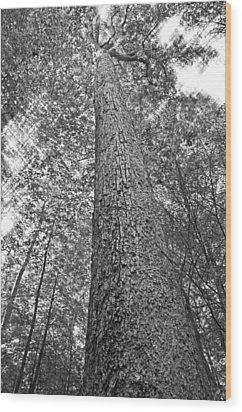 Wood Print featuring the photograph Tall Tree With Sunshine by Susan Leggett