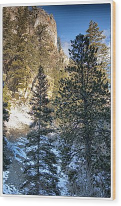 Tall Trees Wood Print by Lisa  Spencer