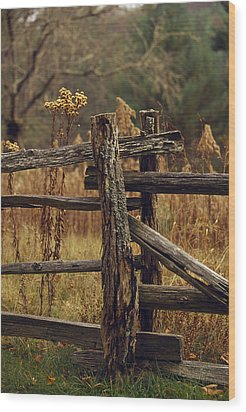 Tall Weeds In Autumn Brown Wood Print by Raymond Gehman