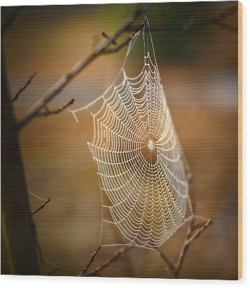 Tangled Web Wood Print by Brenda Bryant