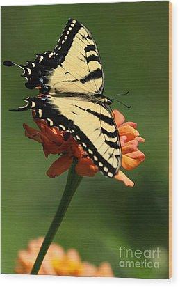 Tantalizing Tiger Swallowtail Butterfly Wood Print by Sabrina L Ryan