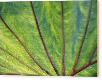Taro 1 Wood Print
