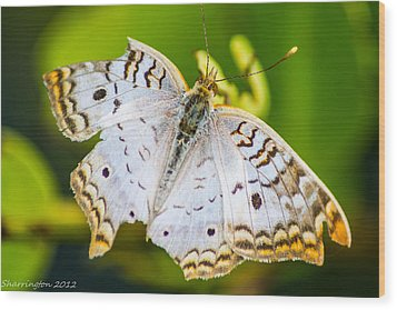 Wood Print featuring the photograph Tattered Moth by Shannon Harrington